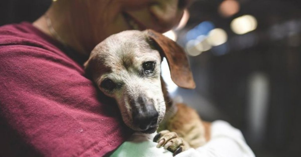 18-Year-Old Blind Dachshund Dumped At Shelter Clings To The First Person Who Makes Her Feel Safe