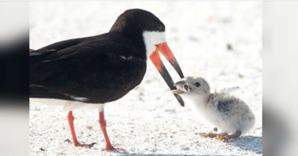 Photographer Spots Mother Bird Trying To Feed A Cigarette To Her Chick