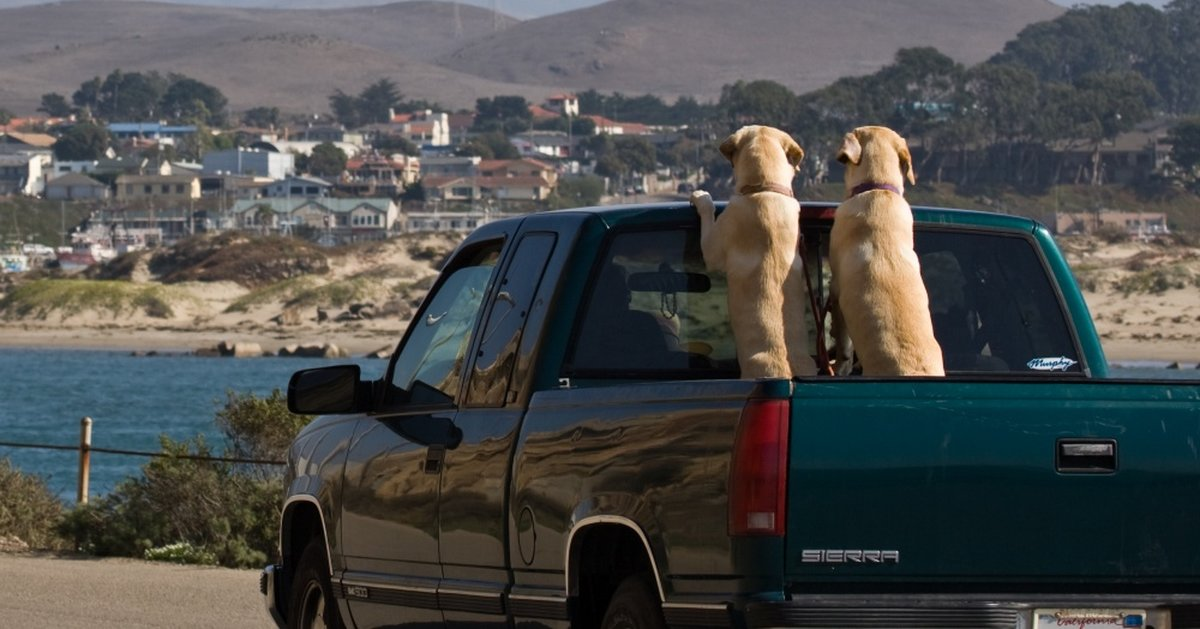 Over 100,000 Dogs Lose Their Life Each Year Riding In Truck Beds