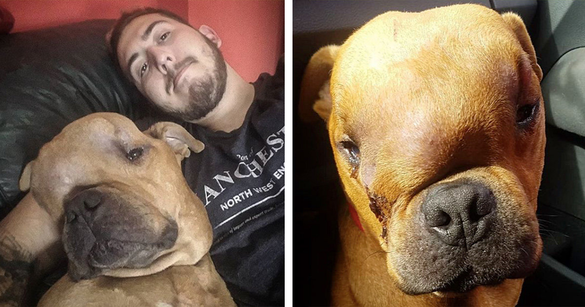 Man Adopts Dog With Massive Tumor So He Can Feel Unconditional Love During His Final Days