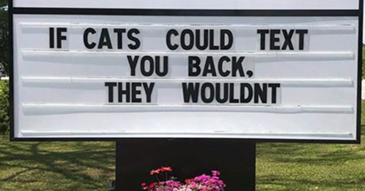 15 Of The Funniest And Most Accurate Cat Jokes That Vet Clinics Put Up On Their Signs