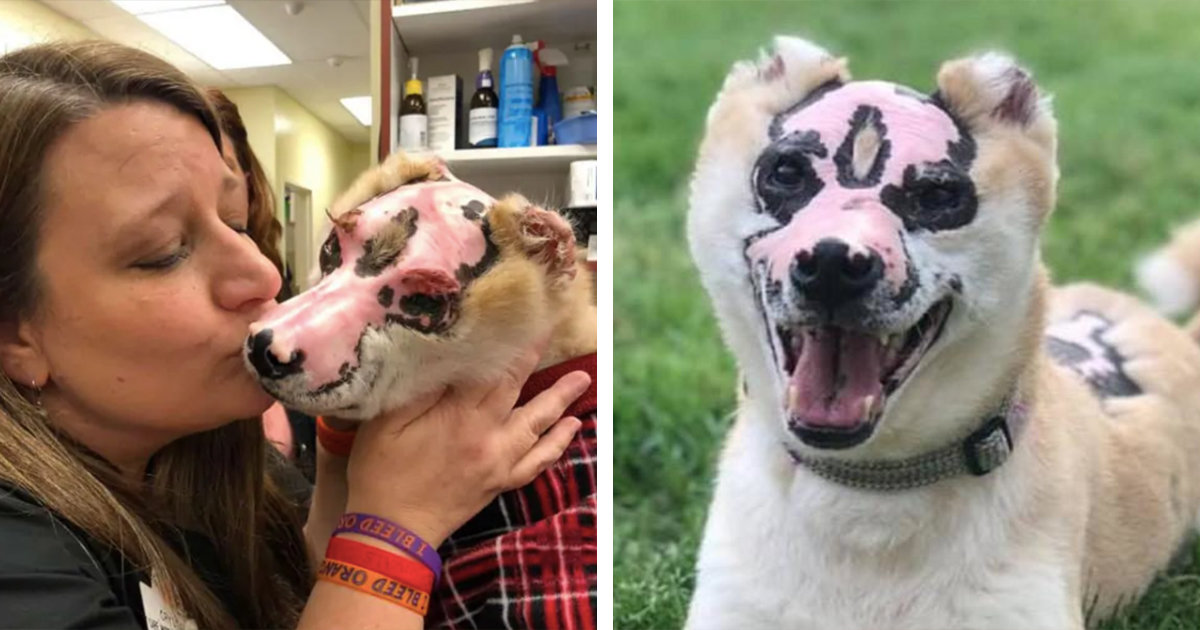 Dog Who Survived House Fire Is Now Dedicating His Life To Comforting Burn Victims