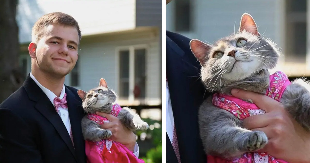 Teen Couldn't Get A Date For The Prom, So He Took His Cat