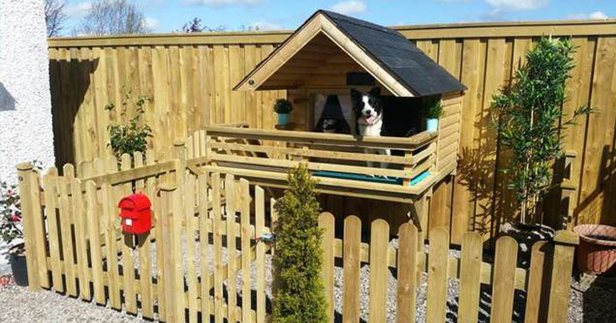 Man Builds A Tiny 'Dog Cabin' In His Backyard For His Pup