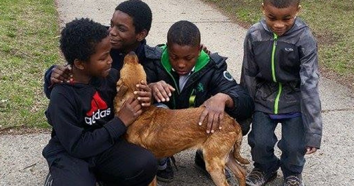 Four Boys Save Skinny Abandoned Dog Tied With Bungee Cords
