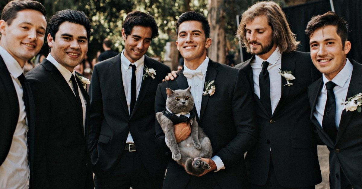Groom Made His Beloved Cat The Best Man At His Wedding