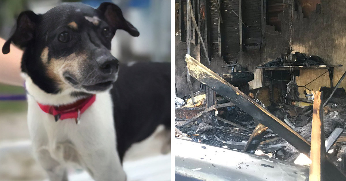 Dog Dies In House Fire After Making Sure Everyone In His Family Got Out Safely