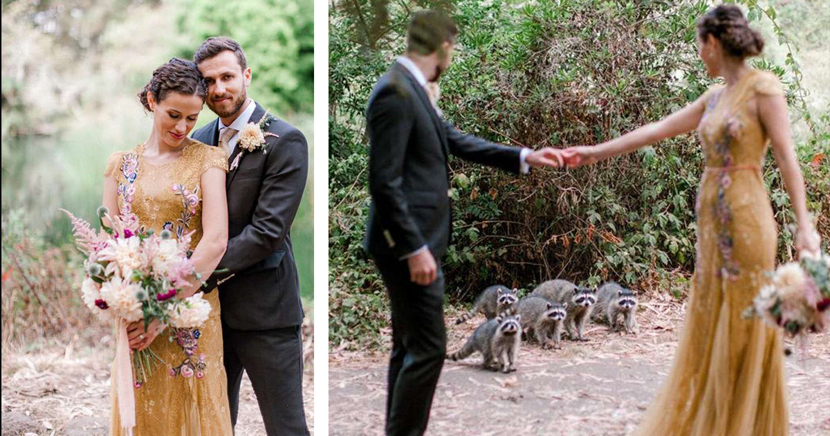 Gaze Of Raccoons Crashes A Couples Wedding Photo Shoot