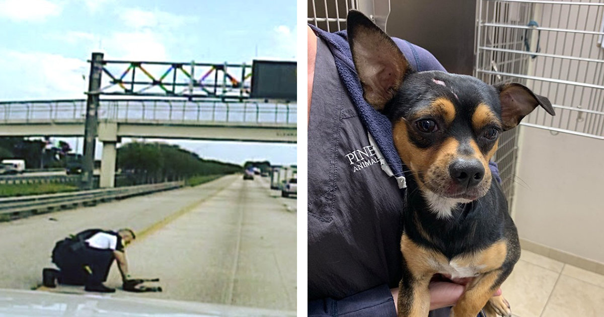 Officer Risks His Life And Dashes Onto Busy Interstate To Save A Dog That Was Hit By A Car