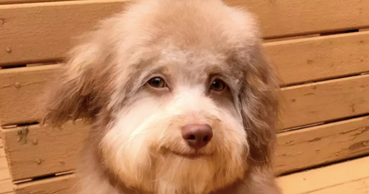Adorable Dog With 'Human Face' Is Freaking Out The Internet