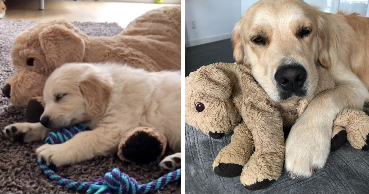 Dog Refuses To Go Anywhere Without His Look-A-Like Stuffed Animal That He Grew Up With
