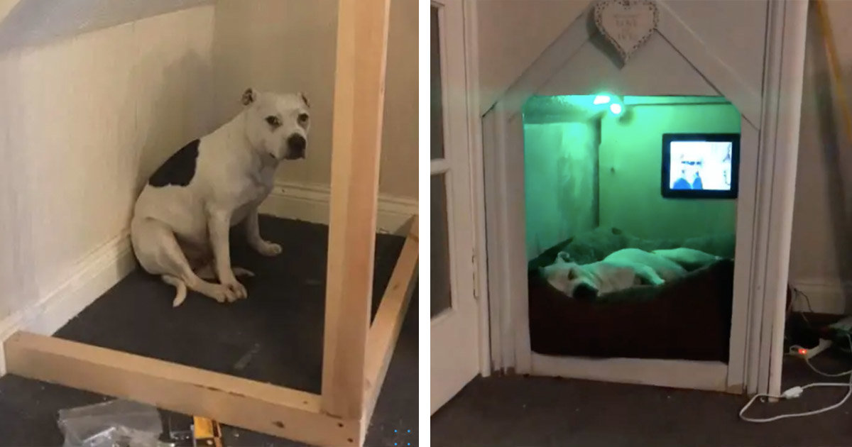 Dad Built His Rescue Dog With Trust Issues A Tiny House In The Living Room To Get 'Alone Time'