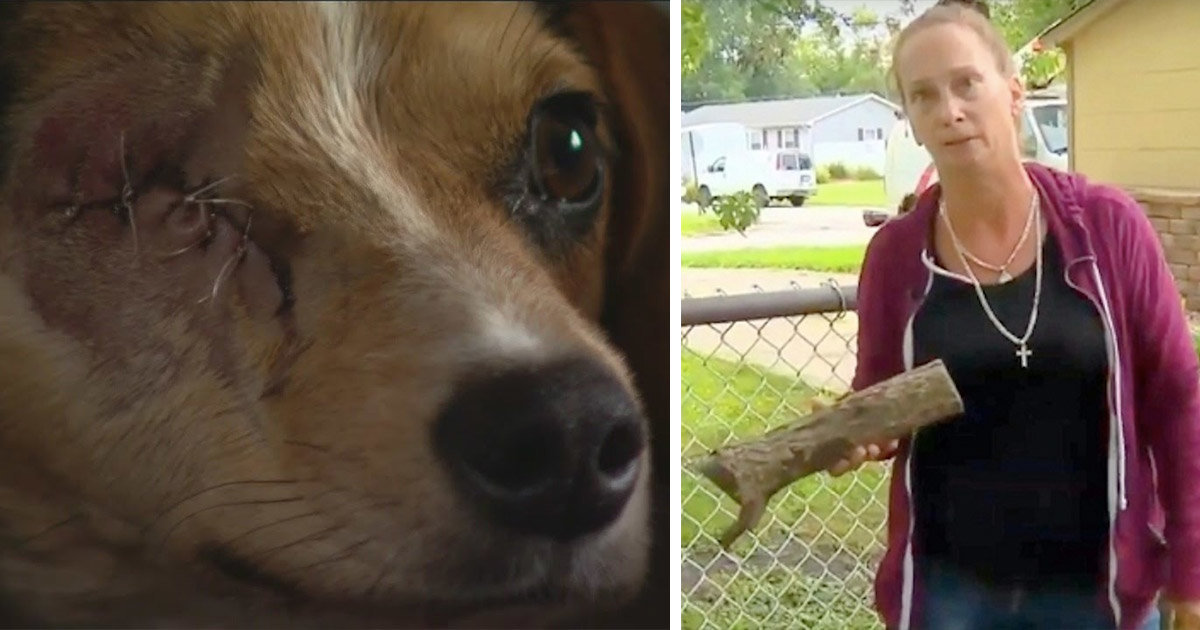 Family Says Neighbor Jumped The Fence And Brutally Beat Their Dog, Should Face Charges
