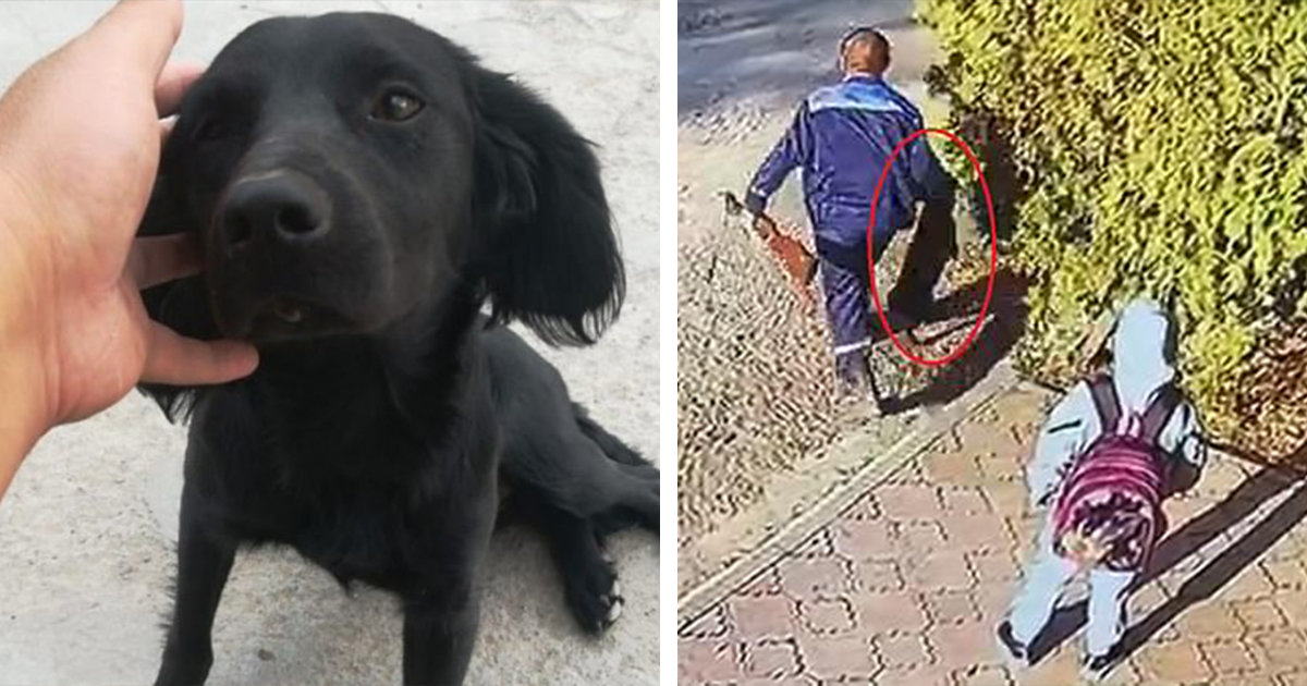 Little Girl Watches As Animal Control Shoots Her Dog With A Poison Dart And Drags It Away