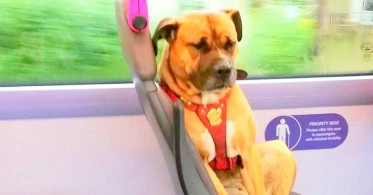 Nobody Has Come Forward To Claim A Dog Found Riding The Bus Alone