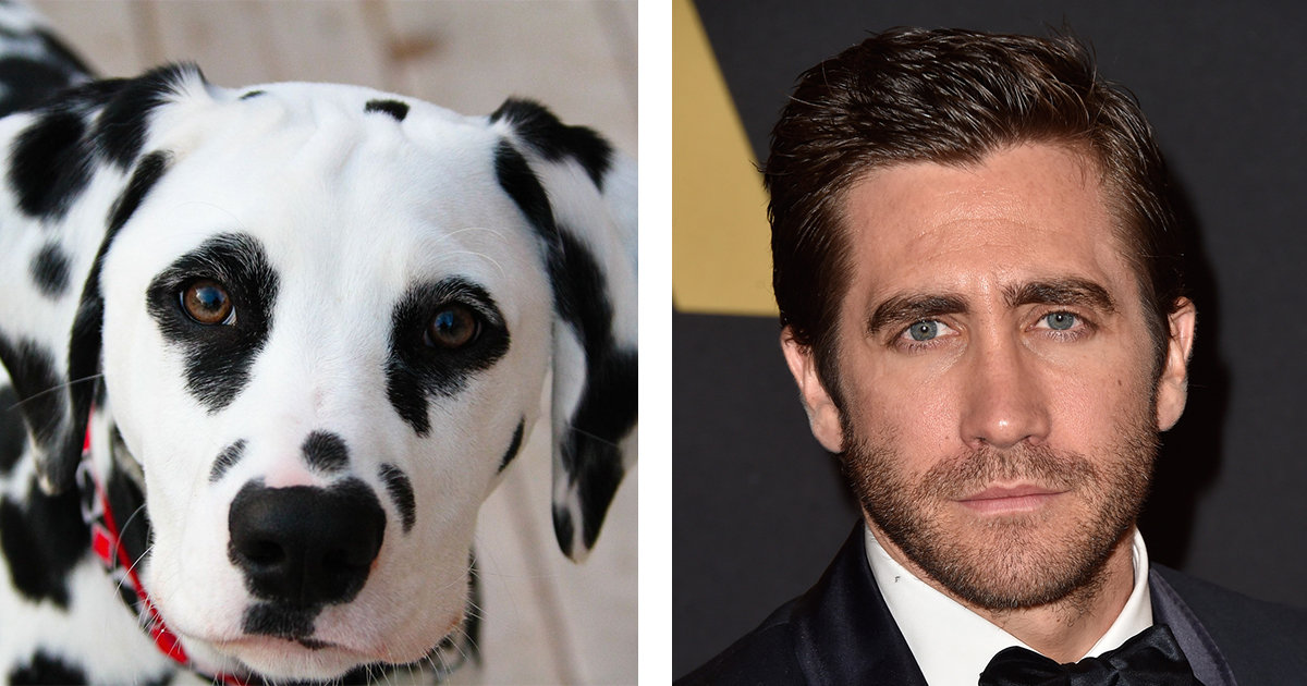 Jake Gyllenhaal Hailed A Hero After Rushing Into NYC Traffic To Save A Stranded Dog