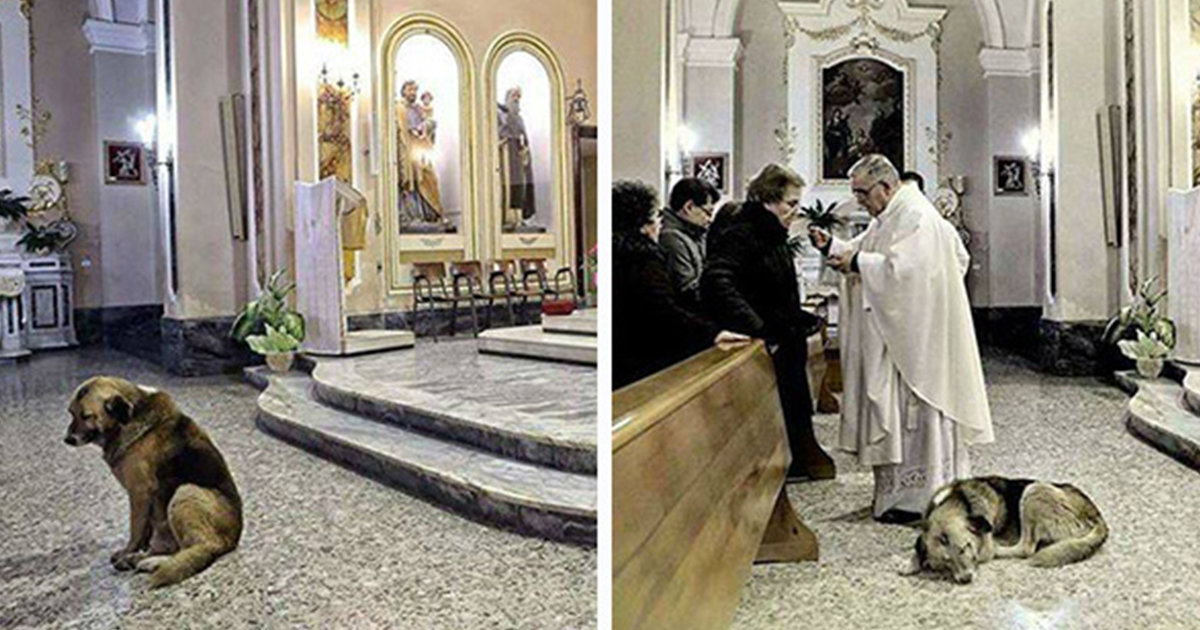 Dog Attends Mass Every Day Where His Owner's Funeral Was, Hoping She'll Return