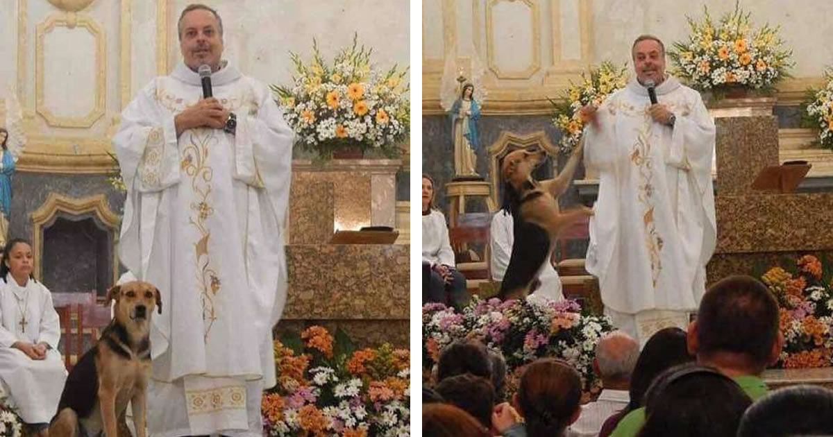 Priest Brings Street Dogs To Mass And Helps Them Get Adopted