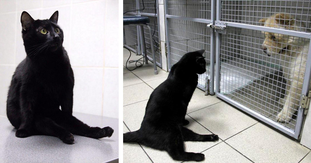 Paralyzed Cat Drags Himself Around A Vet Clinic To Cuddle Sick Dogs