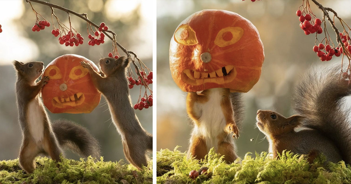 Wildlife Photographer Geert Weggen Captures Squirrels Playing With Halloween Pumpkins