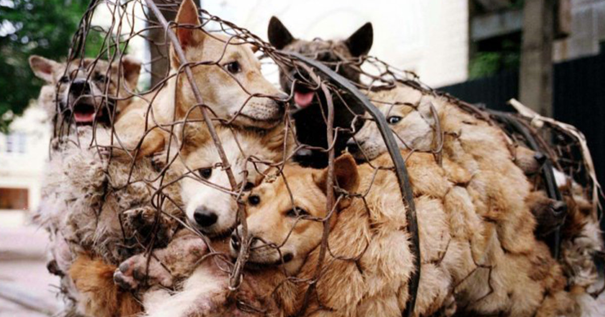 The Last Dog-Meat Slaughterhouse In Seoul, South Korea Has Shut Down