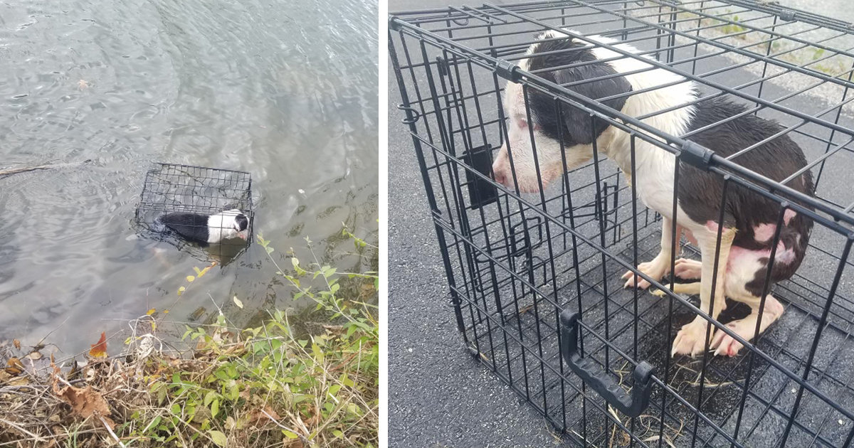 Dog Found Floating In A Cage Near The Edge Of A Lake