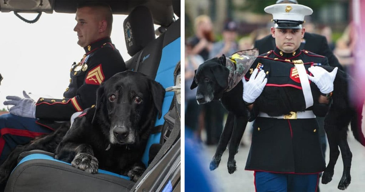 Marine Dog Veteran With Terminal Cancer Gets A Proper Hero's Goodbye