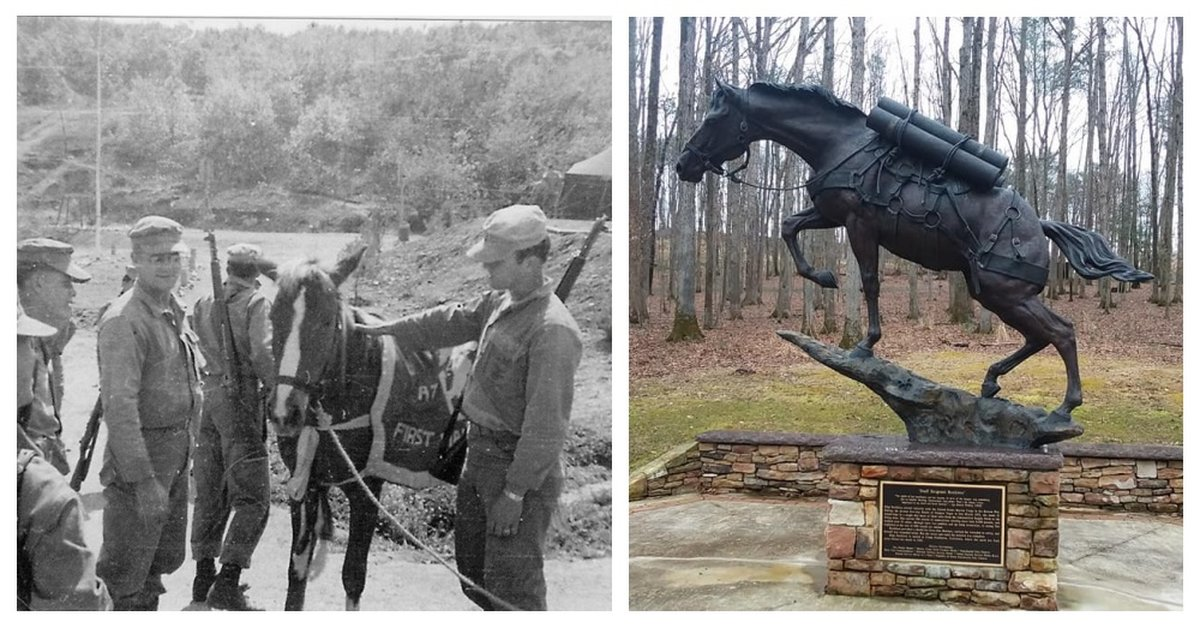 Sgt. Recklesss, America's Greatest War Horse, Carried Ammunition To The Front Lines And Helped Rescue Many Wounded Soldiers