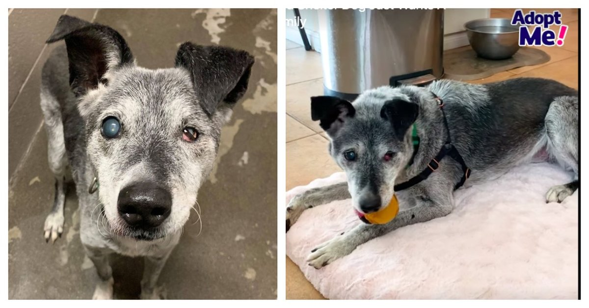 19-Year-Old Shelter Dog Still Loves To Play Fetch And Yearns For A Forever Home