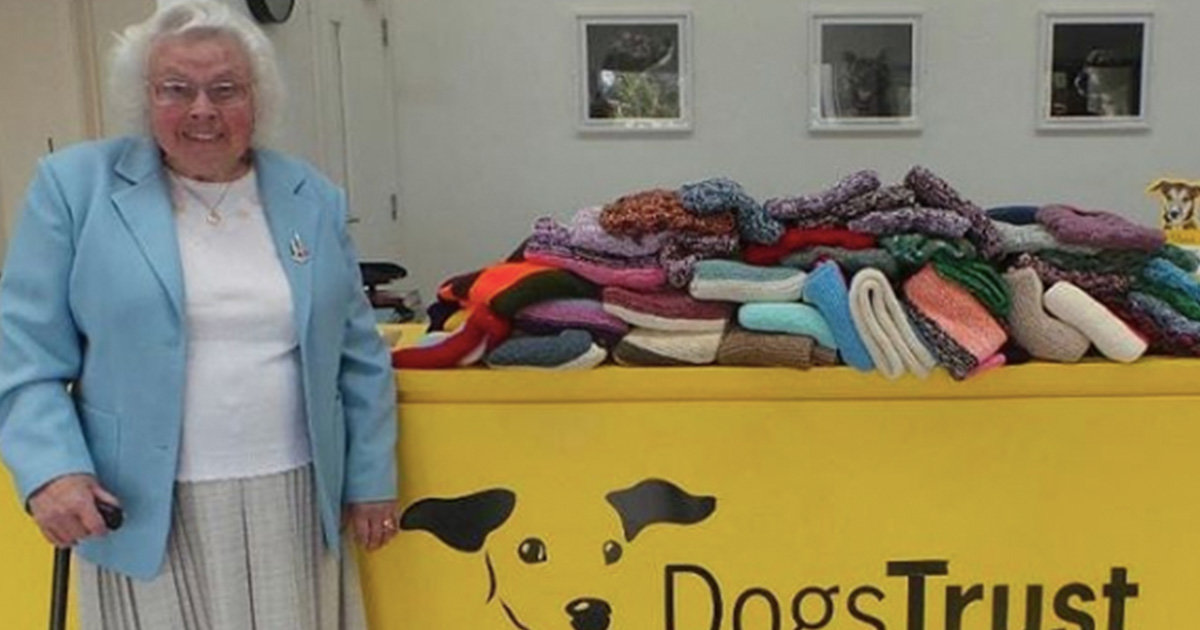 89-Year-Old Woman Knitted 450 Blankets And Coats For Shelter Dogs