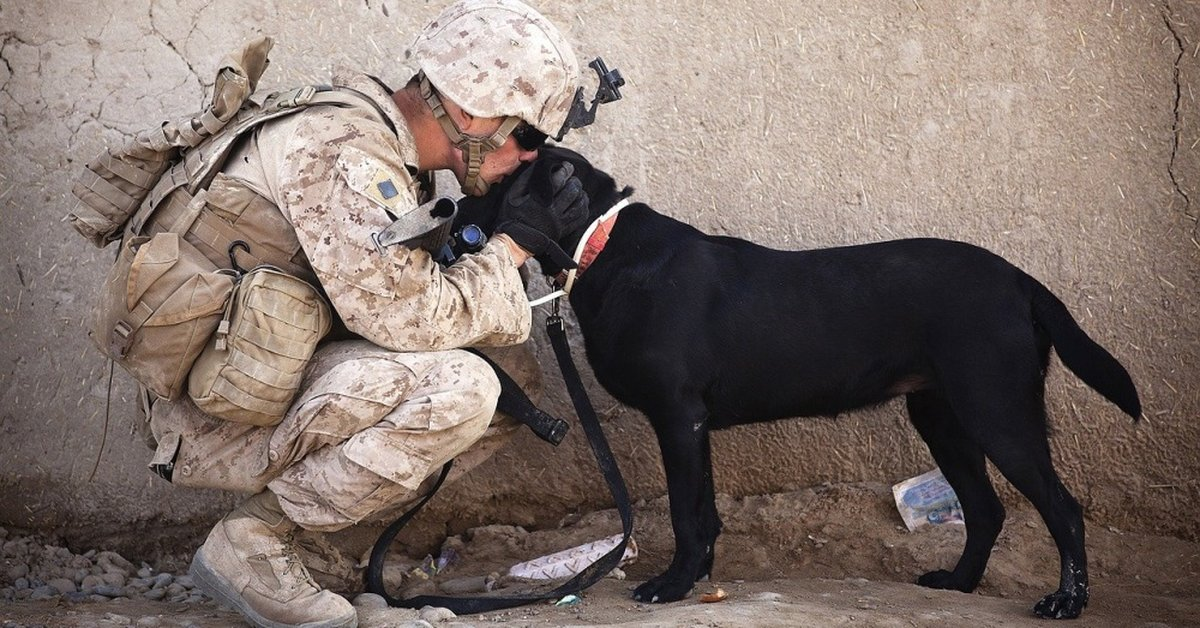 California Veterans Will Be Able To Adopt Shelter Pets For Free In 2020
