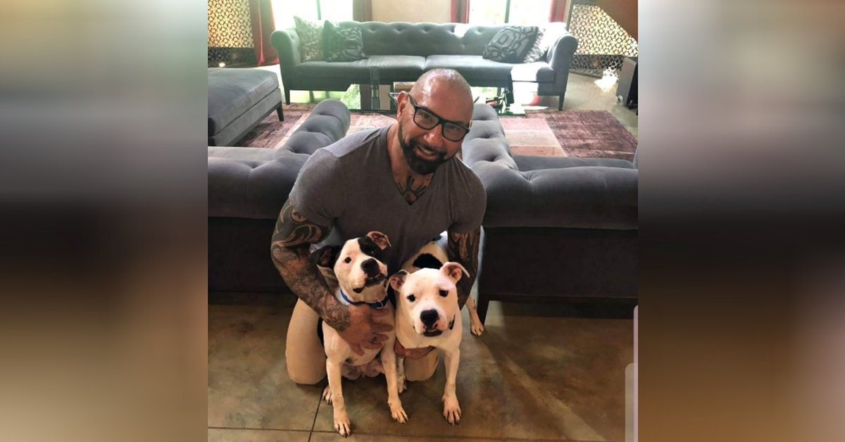 Actor Adopts Two Bonded Pit Bulls After Seeing Desperate Plea From Animal Shelter Volunteers
