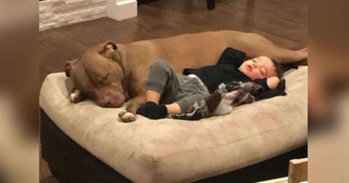 Little Boy Gets The Flu And Only Wants His Rescue Dog To Comfort Him