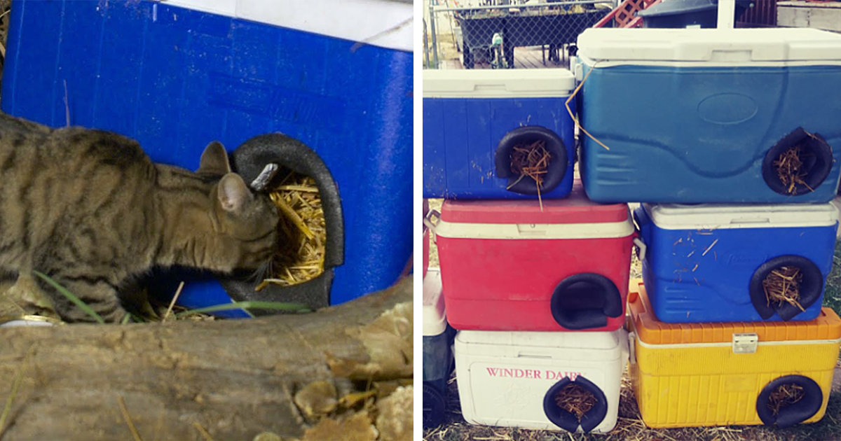 Man Transforms Old Coolers Into Cozy Shelters For Feral Cats In Need Of Warmth This Winter