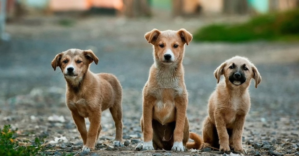 Holland Becomes The First Country Without Street Dogs