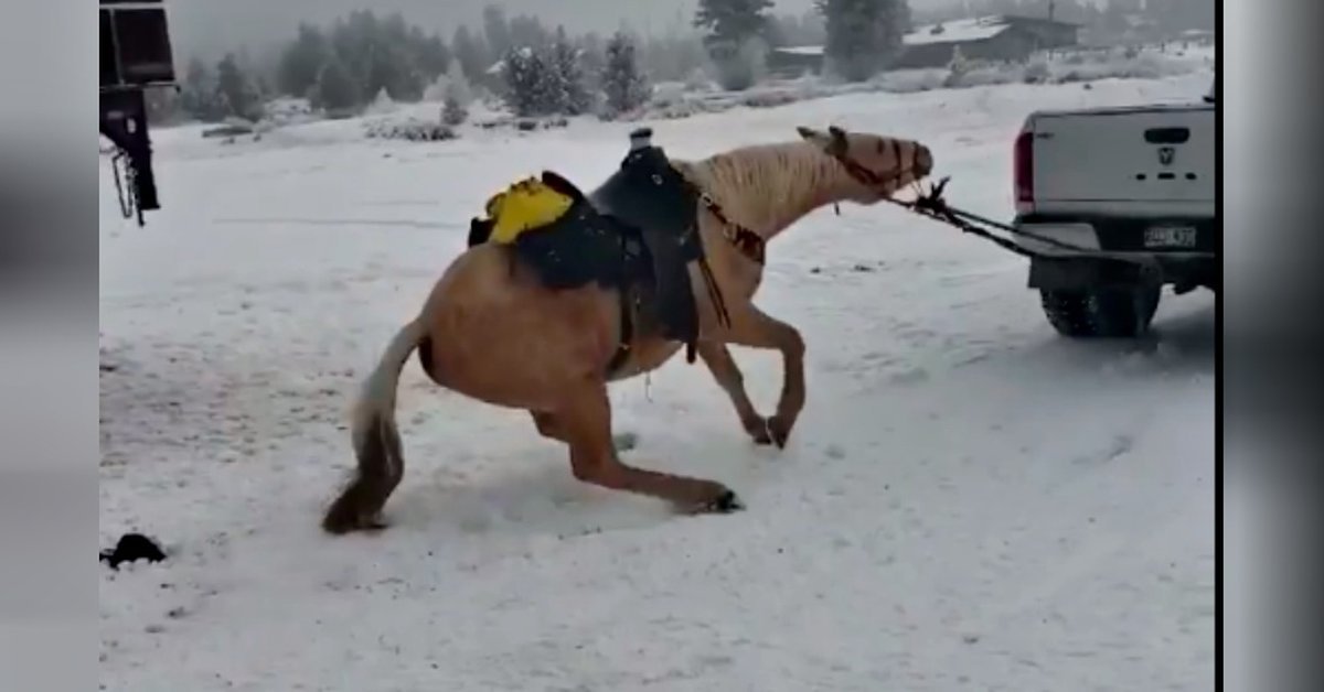 Colorado Couple Drags Horse Behind Truck Because He 'Refuses To Leave The Ranch'