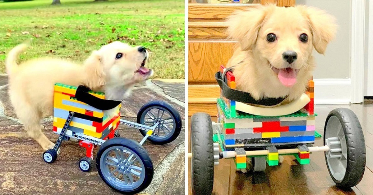 12-Year-Old Boy Builds Dumped Disabled Puppy A Lego Wheelchair