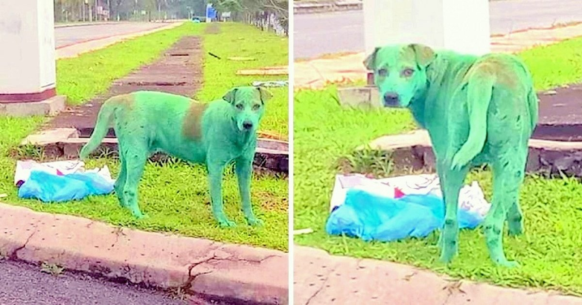 Dog Found Crying After Criminals Painted The Hungry Pup Green