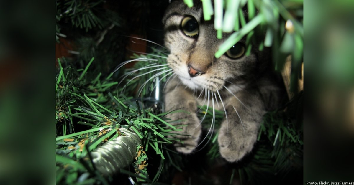 "Man Kills Cat For ""Messing With"" Christmas Tree"