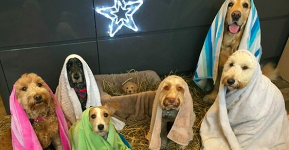 Groomer Gets Dogs To Pose Together For The Cutest Nativity Scene