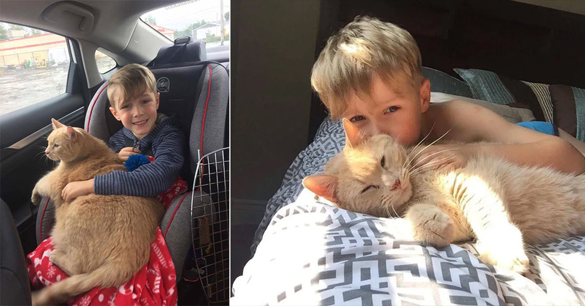 Young Boy Offered Any Animal In The Shelter, Picks 10-Year-Old XL Ginger Cat