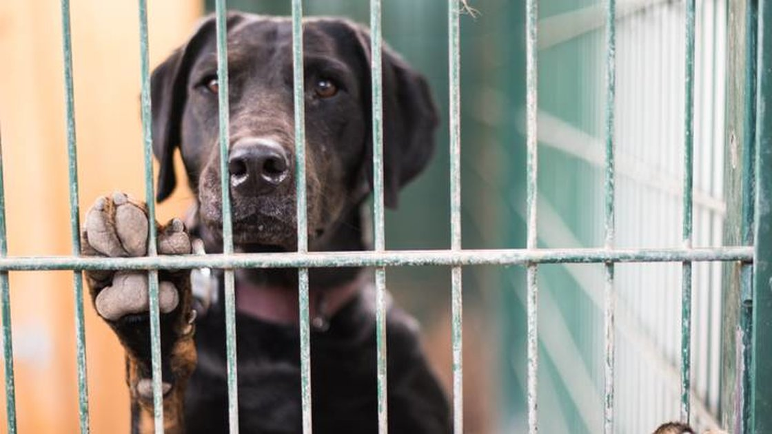 Dogs Being Abandoned On Purpose So Families Can Afford Their Christmas Vacation