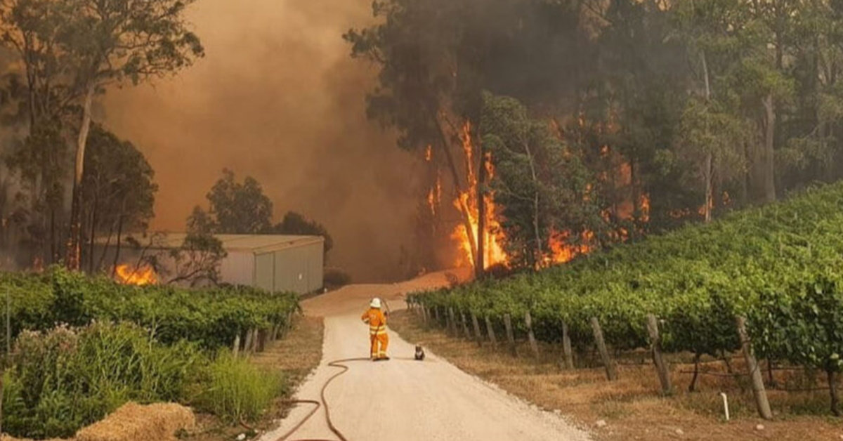 Firefighter And Rescued Koala Watch As Raging Bushfire Destroys Its Home