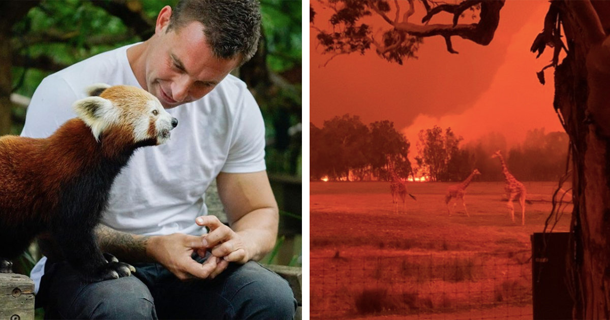 Zoo Director Takes Monkeys And Pandas Home To Save Them From Australia's Wildfires
