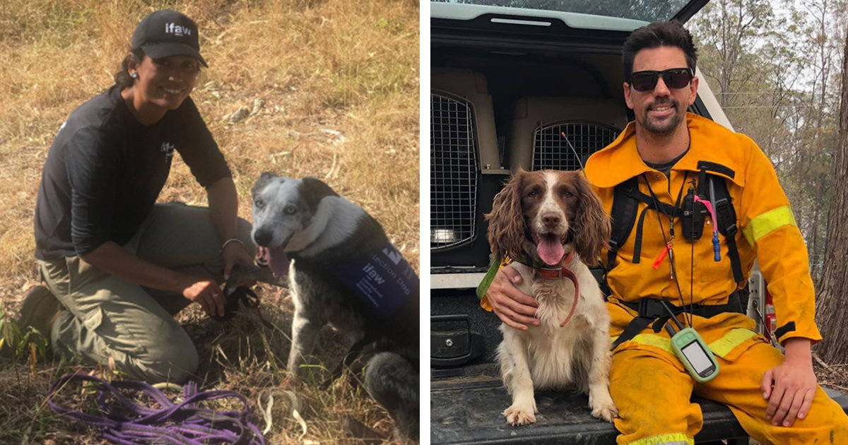 Meet Australia's Brave Dogs Rescuing Koalas From The Deadly Wildfires