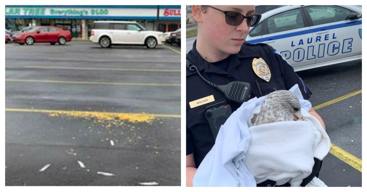 Cruel Person Lured Seagulls To Parking Lot With Popcorn And Then Ran Them Over