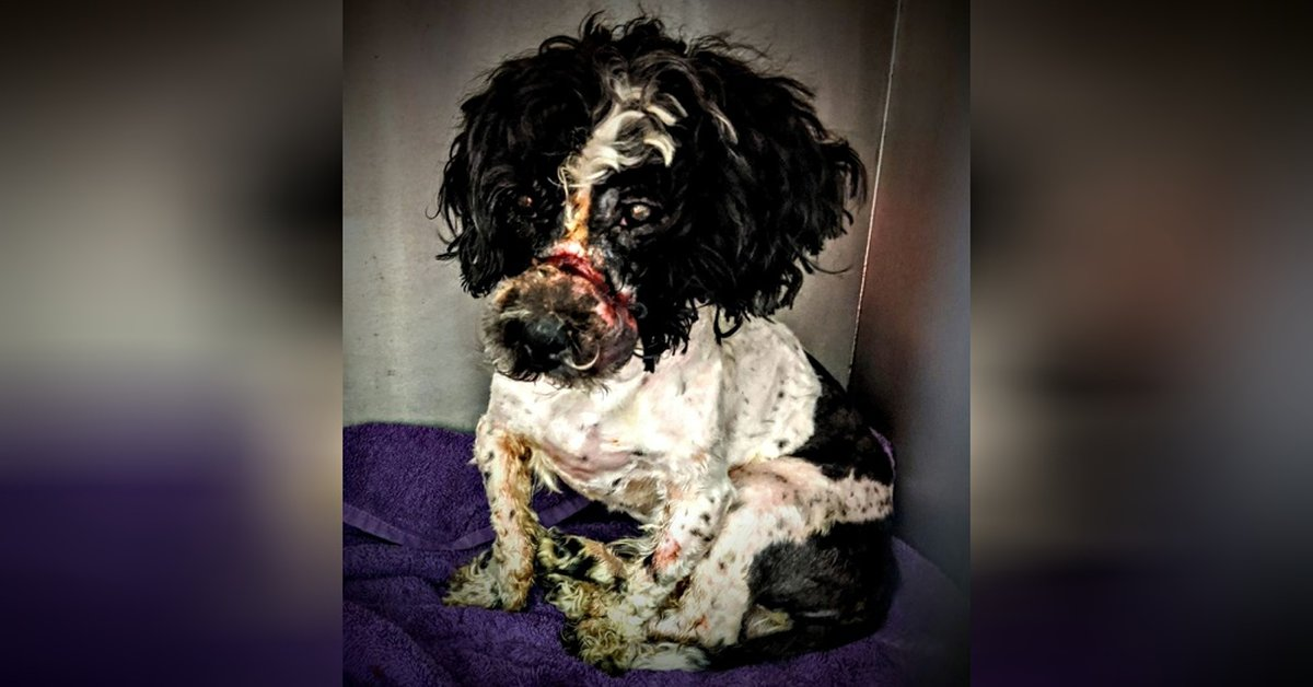 Dog Found With Rubber Bands Around His Muzzle That 'Cut Him To The Bone'