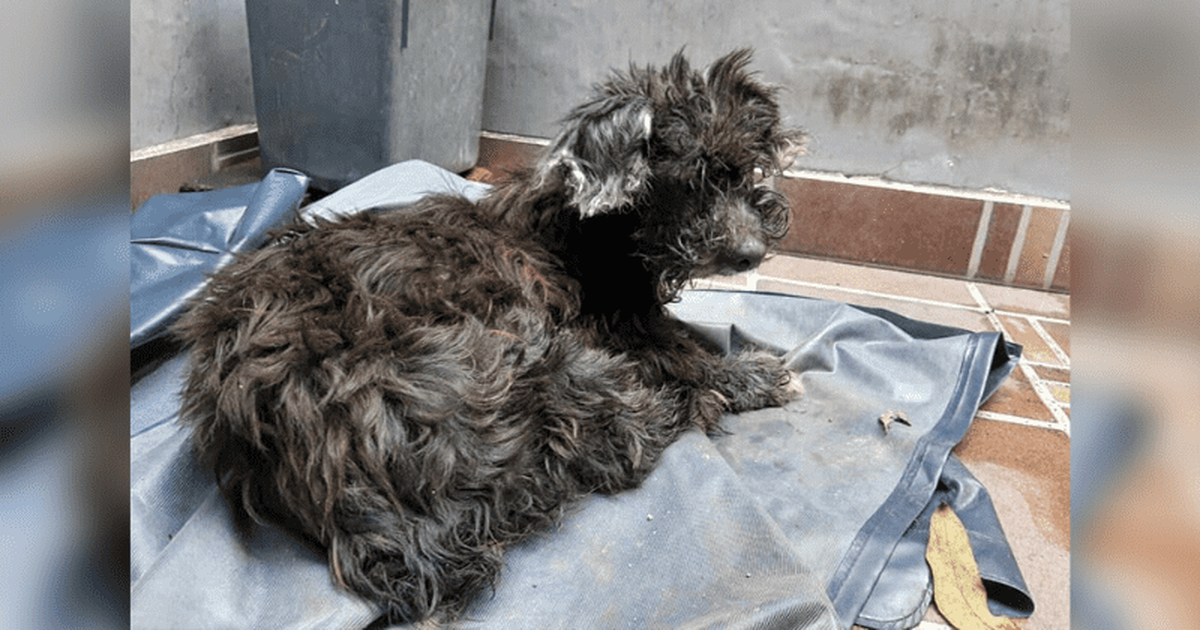 Owner Abandons Dog And Glues Its Eyes Shut So 'It Can't Find Its Way Home'