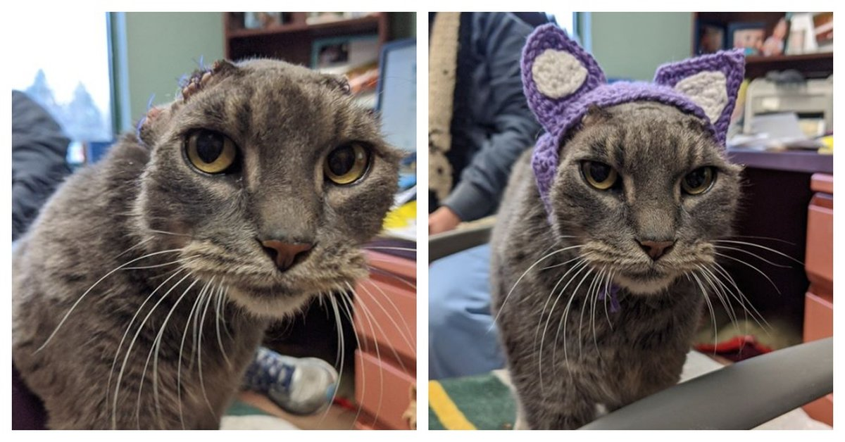 Stray Cat Gets A Pair Of Crocheted Ears And Immediately Finds A Forever Home