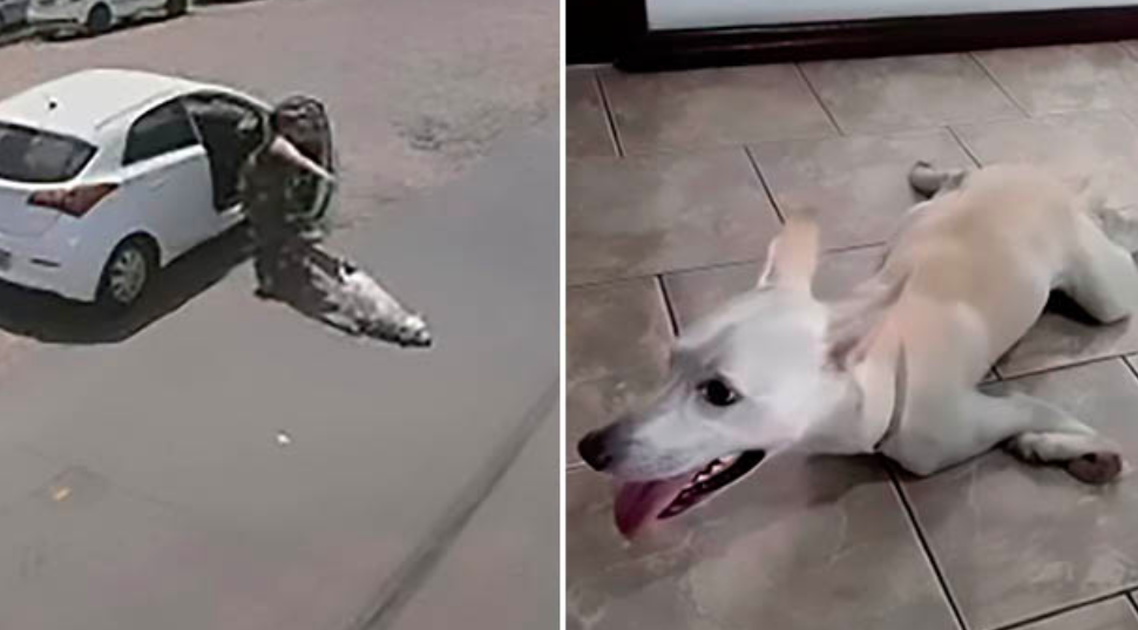 Dog With No Front Legs Dumped Twice In One Day By Heartless Owners